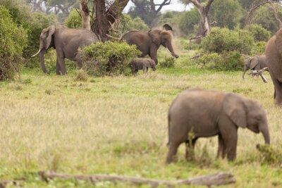 Poster Elephant Family in Kenya