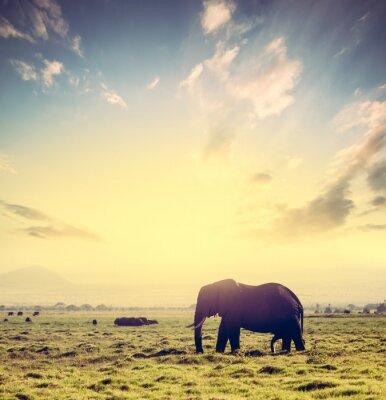 Poster Elephant on African savanna at sunset. Safari in Amboseli, Kenya, Africa