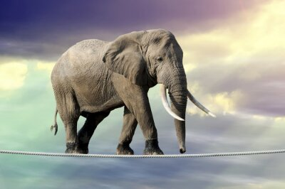 Poster Elephant walking on a rope