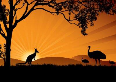 Poster emu kangaroo sunset