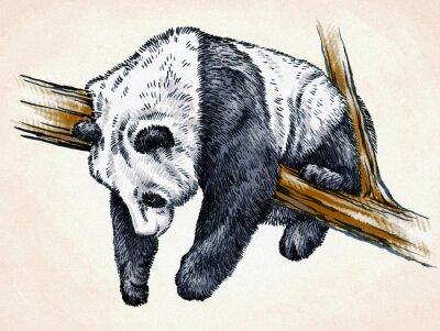 Poster engrave ink draw panda illustration