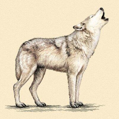 Poster engrave wolf illustration