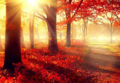 Poster Fall scene. Beautiful autumnal park in sunlight