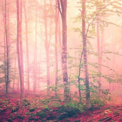 Poster Fantasy forest light