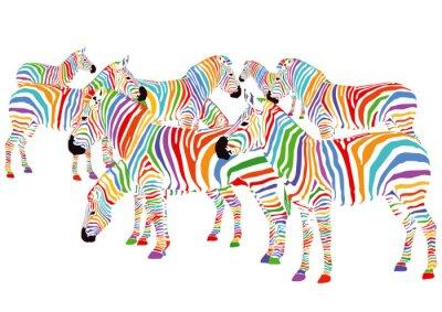 Poster Farbenfrohe Zebras