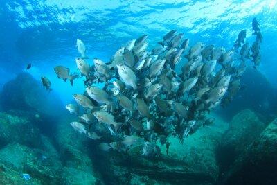 Poster Fish school on underwater coral reef in sea ocean