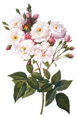 Poster flower illustration
