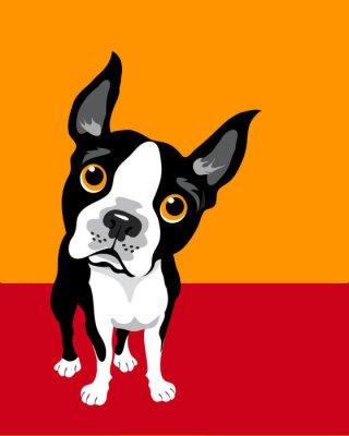 Poster funny illustration of Boston Terrier