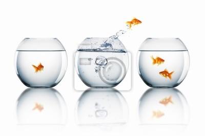 Poster goldfish jump