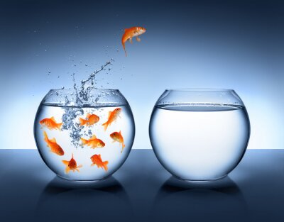 Poster goldfish jumping - improvement and career concept