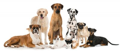 Poster Gruppe verschiedener Hunde - Group of dogs