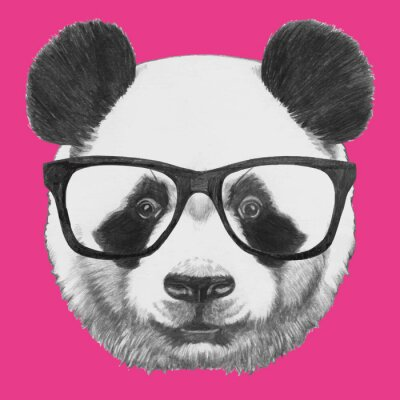 Poster Hand drawn portrait of Panda with glasses. Vector isolated elements.