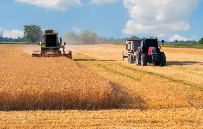 Poster Harvester combine and tractor harvesting wheat on sunny summer day