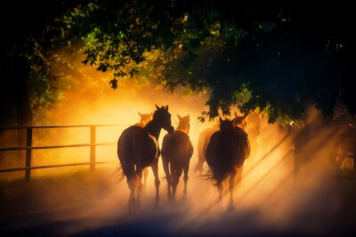 Poster herd of horses