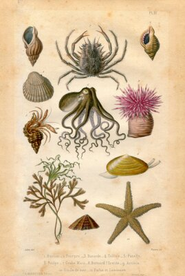 Poster Histoire naturel : Fond Marin
