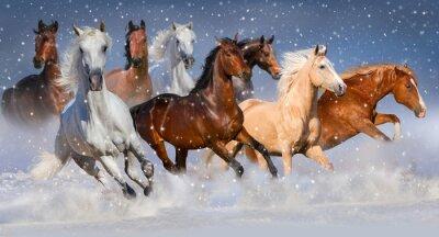 Poster Horse herd run fast in winter snow field