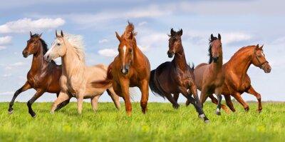 Poster Horse herd run in beautiful green meadow