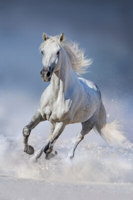 Poster Horse in snow