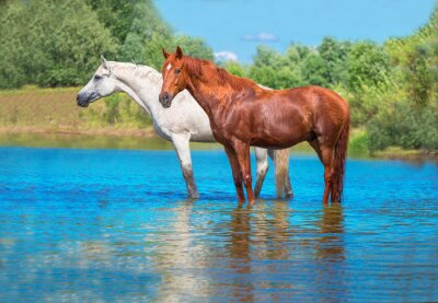 Poster horses