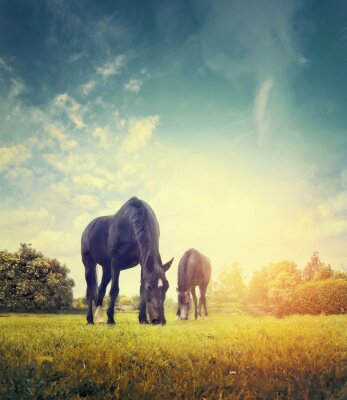 Poster Horses grazing in autumn meadow on background of trees and sky
