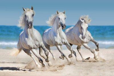 Poster Horses run along the coast