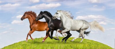 Poster Horses run gallop on green pasture against beautiful sky