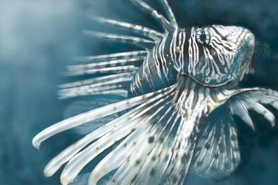 Poster Illustration made with a digital tablet scorpion fish dangerous,