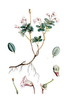 Poster Illustration of flower