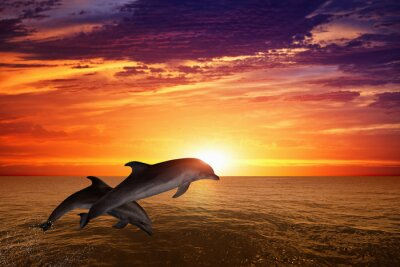 Poster Jumping dolphins