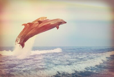 Poster jumping dolphins, instagram