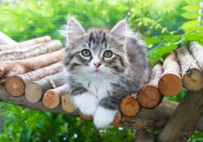 Poster Katzenbaby im Gehege