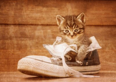 Poster Kitten sitting in a shoe, vintage image