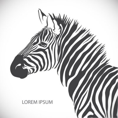 Poster Label with the head of a zebra. Vector.