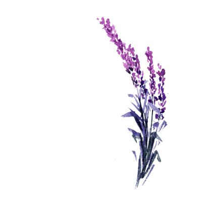 Poster Lavender flower watercolor illustration. Straight lavender branch. Wedding and Valentine s day greeting cards floral design. Love and marriage. Single lavender twig. Isolated raster