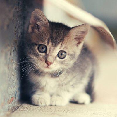 Poster little cute kitten  siting  outdoors