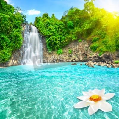 Poster Lotus flower in waterfall pool