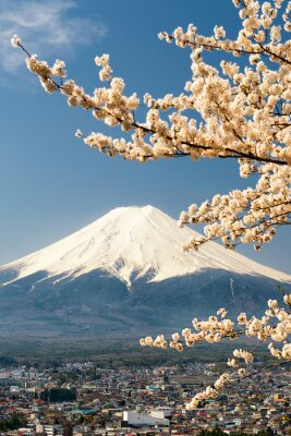 Poster Mount Fuji with branches of cherry tree, Japan