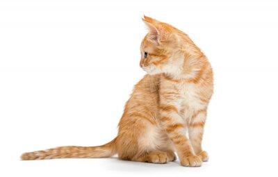 Poster Orange, striped, little kitten