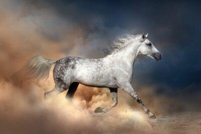 Poster Orlov horse run in dust