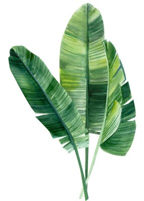 Poster palm tree, leaves of tropical forests on an isolated white background, watercolor illustration