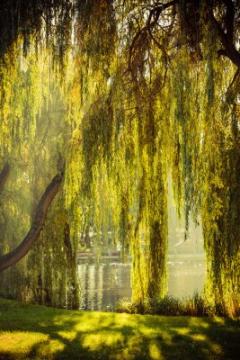 Poster park with pond and willow trees
