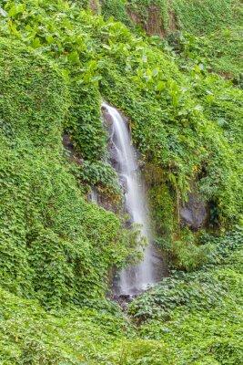 Poster paroi humide et verdoyante, Anse des Cascades, île de la Réunion