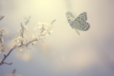 Poster Pastel colored photo of butterfly and spring flowers