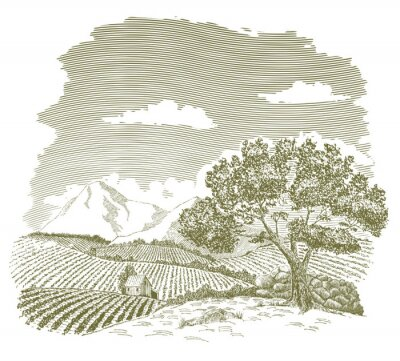 Poster Pen and ink drawing of a farm field with mountains in the background.