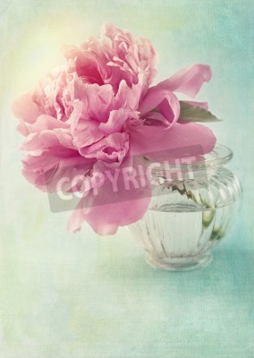 Poster Peony flower in a vase