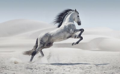 Poster Picture presenting the galloping white horse