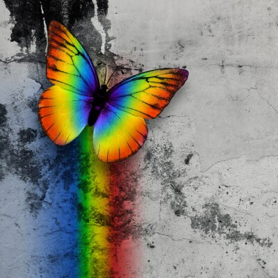 Poster rainbow butterfly
