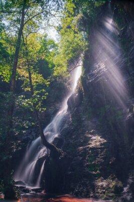 Poster Rayos de sol a través de las hojas del bosque en la cascada de Hortas, Galicia