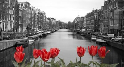 Poster red tulips in amsterdam