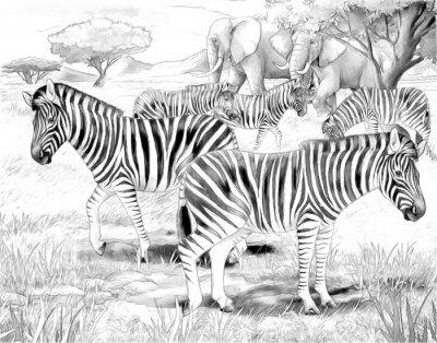 Poster Safari - zebras - coloring page